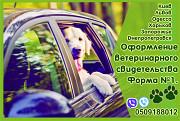 Свидетельство форма 1, ветеринарный паспорт нового образца Официально Днепр