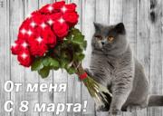 Британский котик приглашает на вязку Луганск