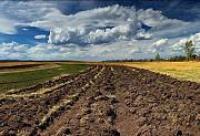Куплю землю сельхозназначения цена от 50000 грн Сумы