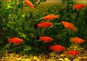 Продам аквариумных рыбок Харьков